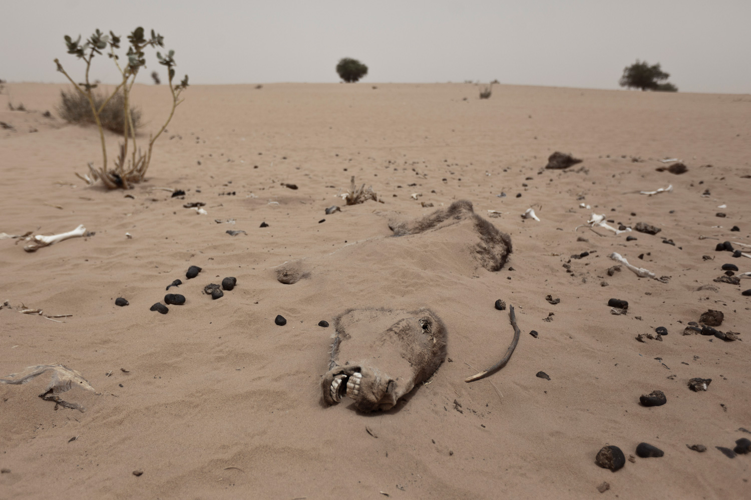 desertification in africa essay Read this essay on drought and desertification in the sahel zone, africa come browse our large digital warehouse of free sample essays get the knowledge you need in order to pass your classes and more.