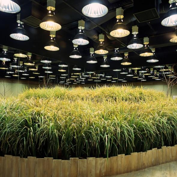 PASONA O2 : The Artificial Farmland In Tokyo.