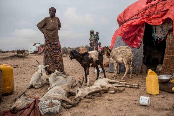 Somaliland herders