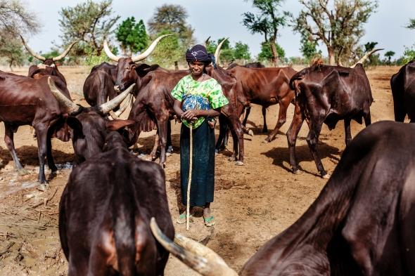 NI-KE-Livestock-SHauensteinSwan-0512-IMG_7766.jpg